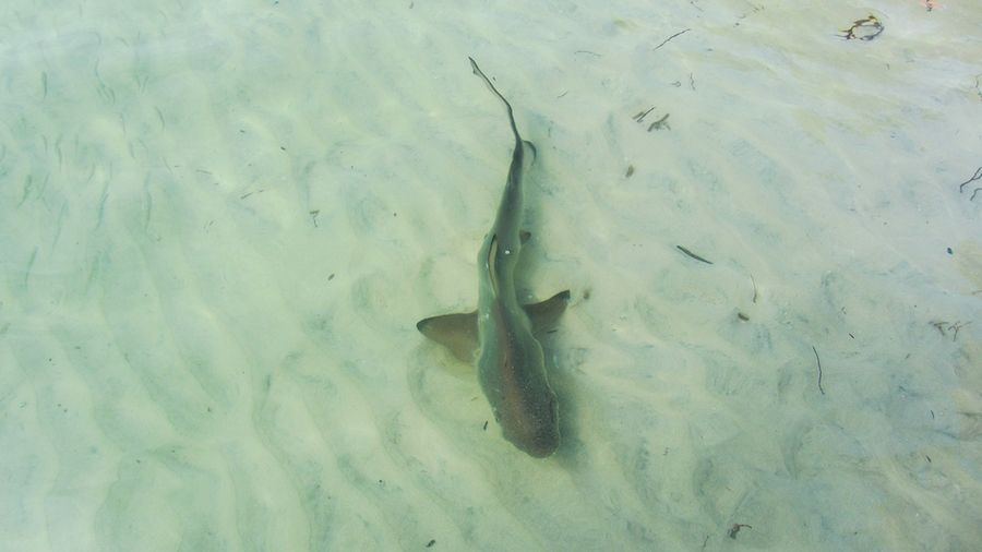 baby sharks in the galapagos
