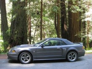 2004 Ford Mustang GT in Californian redwoods