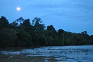 Abai Jungle Lodge sunset