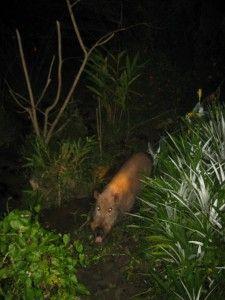 abai jungle resort