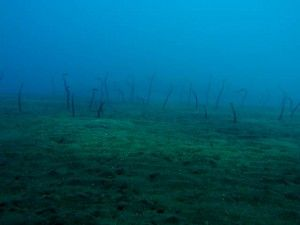 garden eels bali