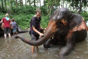 a mahout