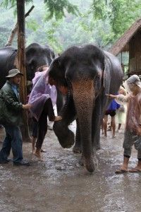 where can i ride an elephant