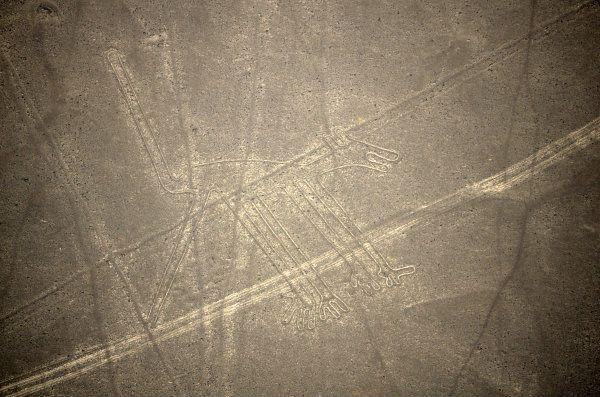 Nazca Lines Dog Symbol