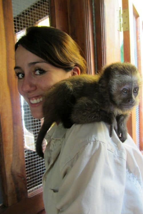 Baby Capuchin Monkey Bolivia