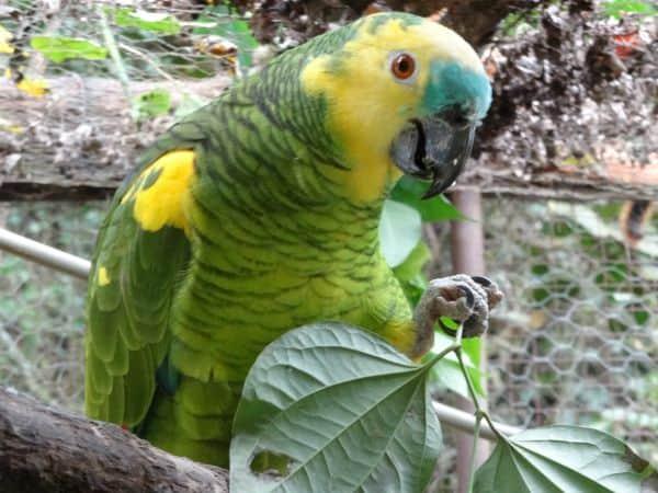 Exotic Birds of Bolivia