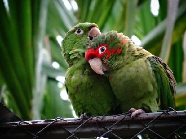 Birds at La Senda Verde