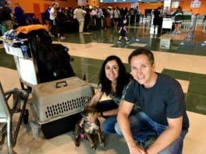 Rescuing a cuban street dog