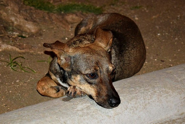 Rescuing a street dog in cuba