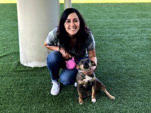 Street Dog Rescue Cuba