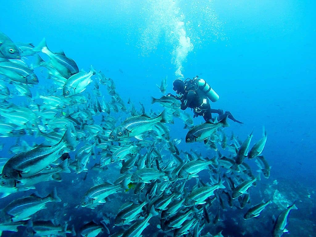 Scuba diving wit a school of fish in the Galapagos.